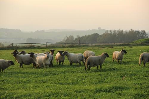 chová 70 dojnic, zvířata jsou ve stodole po celý rok
