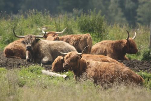 průměrná slovinská farma těsně pod 5 hektarů zemědělské půdy