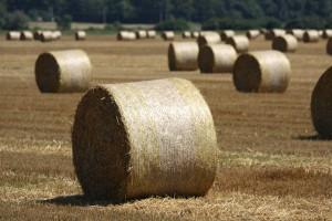 Moskva zakazuje Monsanto