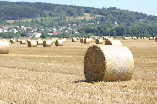 Problémy zemědělství
