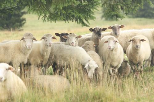 situace v zemědělství v členských státech EU
